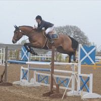 Figaro van de Bossrand Patchetts Showjumping